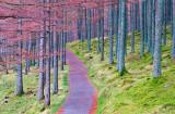 Path & Trees