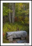 Wild Garden Bench