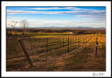 December Afternoon in the Vineyard