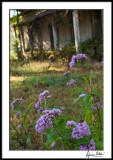 Garden Still Growing 2