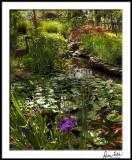Sunrise Pond with Iris