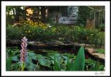 Water Garden/Studio early morning