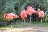 Flamingo, South Carolina USA