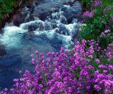 Canyon Water Favorites