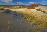 # 147 -  Dune Colors