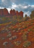 _MG_9987 Coffee Pot Rock  (far right) & Desert Flowers