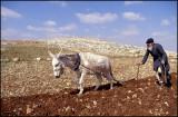 Farmer from Samaria