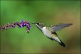 Nectar tasting