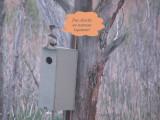 Harle couronnée femelle - Female Hooded Merganser