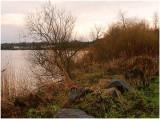 River Bann bushes