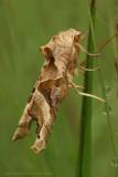 Angle Shades - Agaatvlinder