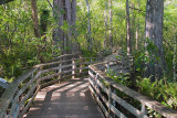 5148 -   Corkscrew Swamp Sanctuary