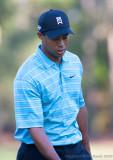 29245 = Tiger Woods
