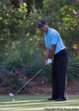 29463 - Tiger Woods