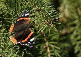 Le tout derniers papillon de l'année