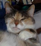 always let sleeping cats sleep