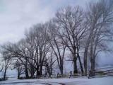 Trees San Luis Valley Colorado Jan 07