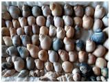 Seashell Parade