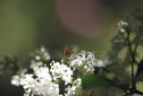 Bye, Bee