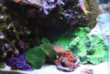 Another of the Reef Tank
