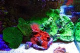 More high color in the Reef tank