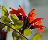 Fleurs rouges dans le profil