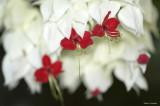 Floral Kisses