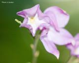 Posing Purple