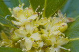 Evergreen Blooms