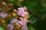 Floral Rebirth