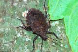 Beetle On Bark