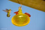 Another Hummingbird In My Backyard