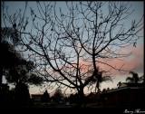 Crazed sky