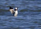 Lake Park Ducks and Gulls
