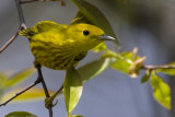 Lake Park Warblers - Spring and Fall of 2007