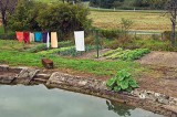 Vegetable garden and laundry