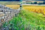 Ancient vineyard wall