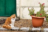 Is that a catnip plant?