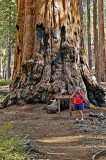 Colonel Young Tree ,Sequoia National Park