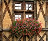 Half-timbered windows
