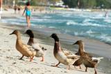 The Golden Beach, Thassos
