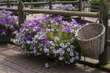 paarse bloemen.jpg
