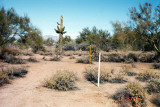 Site selection and alignment. View looking north. The white pole to the right of the Giant Saguaro cactus is to align on Polaris. (Not terribly important at this stage.)