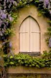 Wisteria Window