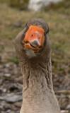 Just Another Flocking Bird Gallery