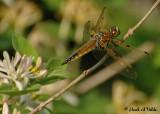 20070527-2 020 Dragonfly
