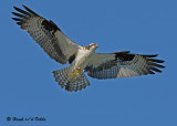 20070721-1 181 Osprey .jpg
