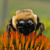 bees__wasps_2007