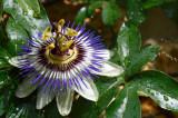 jardin001web.jpg