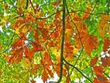 Autumnal colours 2